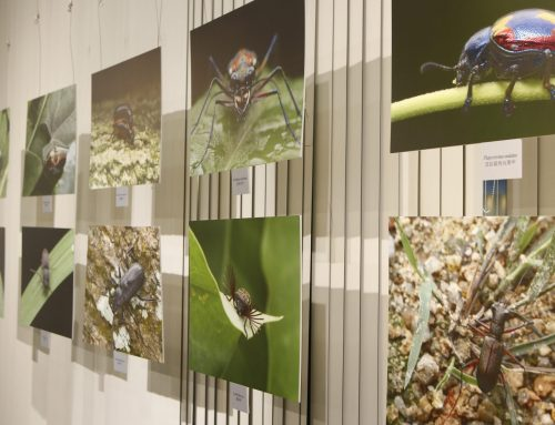 UM holds insect photo exhibition